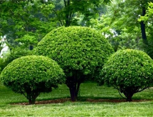 Growing Your Tree & Shrub Investments