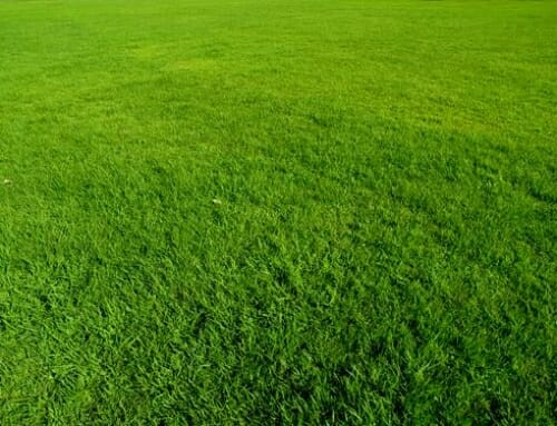 Enhance Your Lawn With Proper Nutrition & Weed Control
