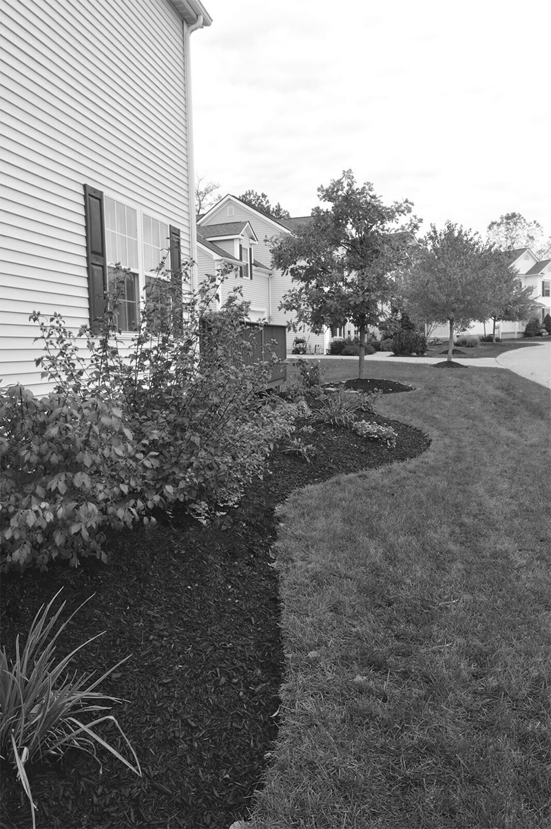 black and white image of mulch and landscaping