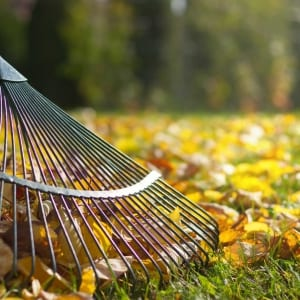 fall clean up services rake and leaves